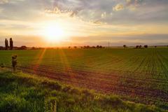 gree field at sunset - stock photo
