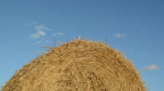 Macro straw bale round roll background blue cloud sky Stock Footage