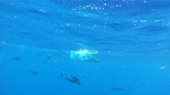 Dolphin Mahi Mahi Fishing 1 Stock Footage