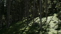 Forest trees Stock Footage