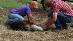 Removing cast from calf leg Stock Footage