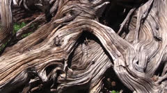 Twisted tree root Stock Footage