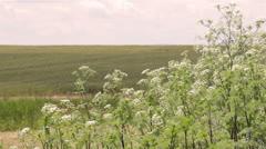 Hot Summer Wildflowers - stock footage
