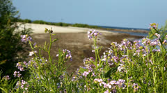 Flowers at the beach Stock Footage