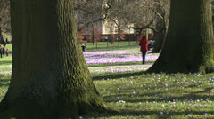 Stroller in city park with crocus field in spring Stock Footage