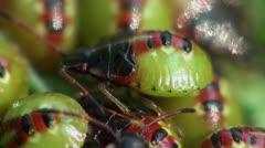 Small green beetle macro Stock Footage