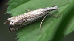 Butterfly larva macro Stock Footage