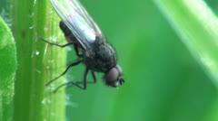 Housefly macro Stock Footage