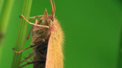 Butterflie macro Stock Footage