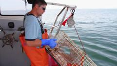 Lobsterman Pulls Trap From Ocean, Opens it, Shows Lobsters Inside, Maine Stock Footage