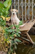 Surullinen koira paeta tulva Kuvituskuvat
