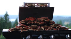 Babe-Q Crabs Stock Footage