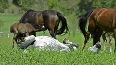 Warmblood mares and foals on meadow Stock Footage