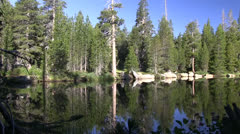 Squirrels at Wrights Lake Stock Footage