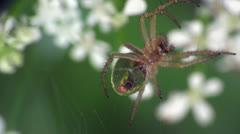 Spider macro Stock Footage