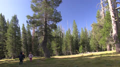 childern play forest meadow - stock footage