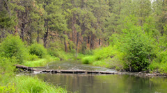 Peaceful Deschutes River Stock Footage