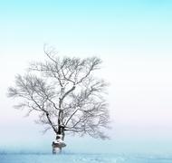 bare tree with snow - stock photo