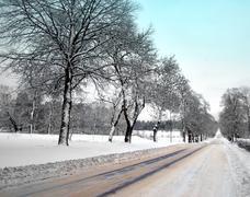 avenue in winter - stock photo