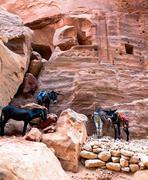 donkeys at petra - stock photo