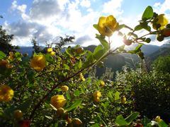 Drakensberg Flora Stock Photos