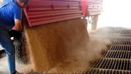 Stock Video Footage of Farmer unloading wheat in a silo