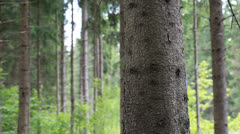 Man in the woods behind a tree Stock Footage
