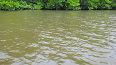 tropical river with mangroves - stock footage
