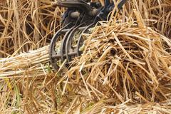 Equipment machine harvest sugarcane. Stock Photos