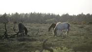 Stock Video Footage of NewForest010613 0363
