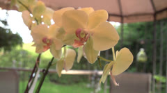Slow Motion Orchid Flyby Stock Footage