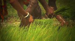 Close shot of farmer showing sapling Stock Footage