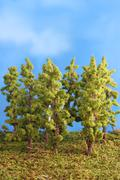 miniature artificial trees - stock photo