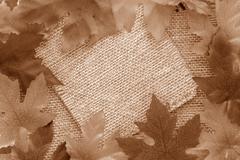 sepia leaf background - stock illustration