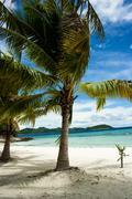 Vihreä puu valkoisella hiekkarannalla. Kuvituskuvat