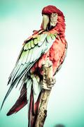 A red and green macaw closeup over blurred background. Stock Photos