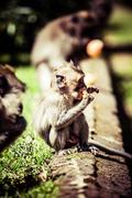 monkey family at sacred monkey forest ubud bali indonesia - stock photo
