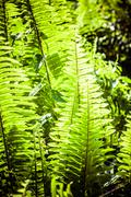 Stock Photo of dynamic fern composition, vibrant green background texture