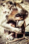 Monkey family at sacred monkey forest ubud bali indonesia Stock Photos