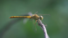 Dragonfly Closeup Stock Footage