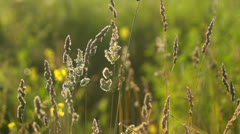 Beautifully backlit natural meadow, wild plants in sunshine Stock Footage