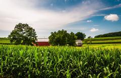 Cornfield, barn, and house on a farm in southern york county, pennsylvania. Stock Photos