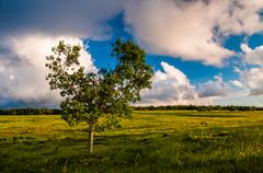 evening clouds over tree in big meadows, shenandoah national park, va. - stock photo