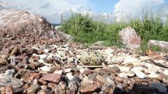 Common tern (Sterna hirundo) separate egg on stones Stock Footage