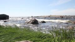 Coast of the Baltic Sea. green cane and quickly moving waves of a sea surf Stock Footage