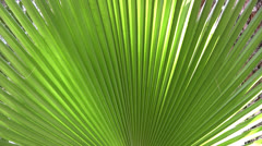 Palm leaf fronds Stock Footage