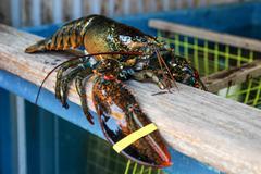 Big lobster Stock Photos