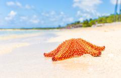 Colorful sea star (starfish) in a tropical beach Stock Photos