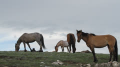 Wild horses on skyline Stock Footage