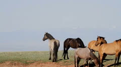 Wild Stallions at waterhole Stock Footage